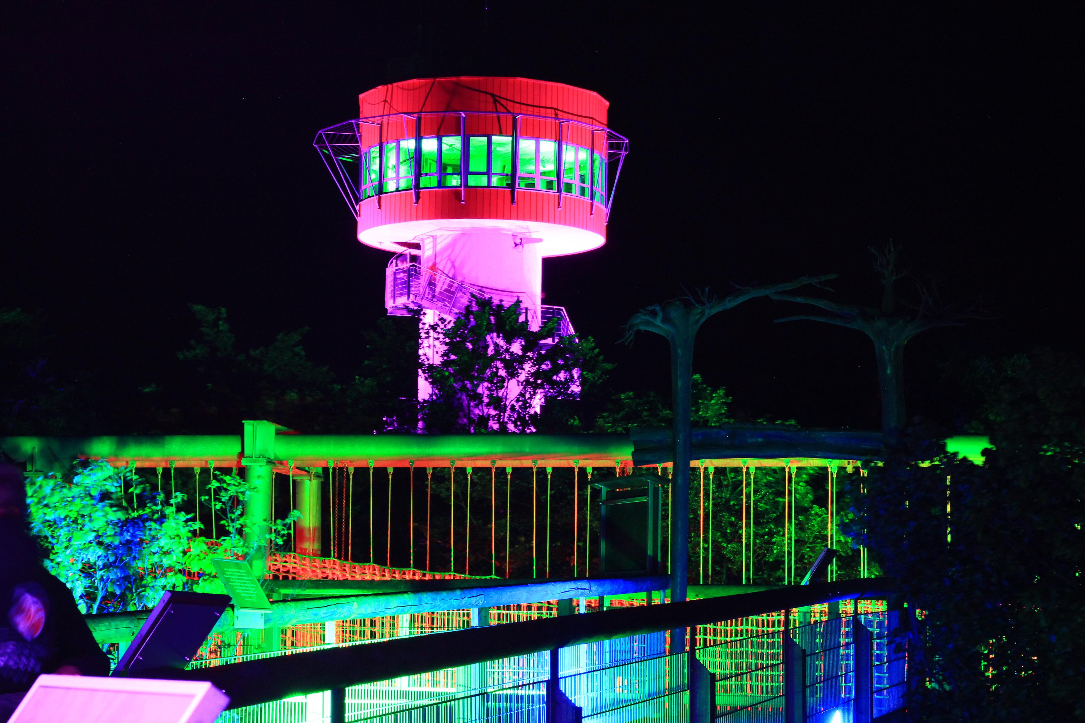 Höhengenuss auf dem Baumkronenpfad Ambiente Beleuchtung